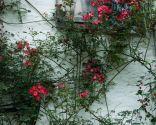 Diferentes plantas para decorar fachadas - Cuidados