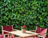 Diferentes plantas para decorar fachadas - Hiedra