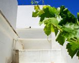 Diferentes plantas para decorar fachadas - Parra