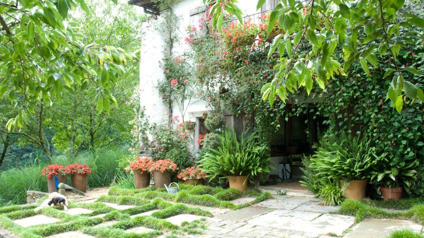 Plantas para decorar plantas para decorar caja con for Diferentes jardines