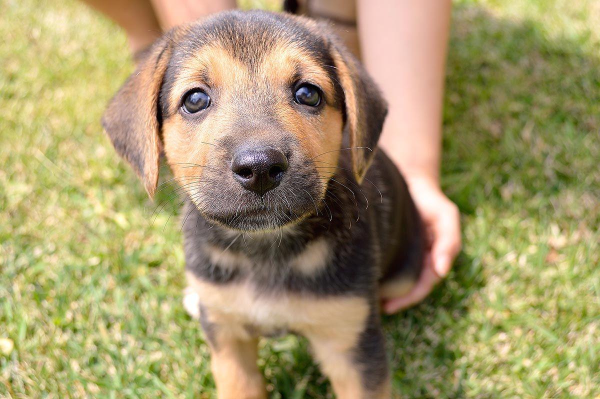 consejos evitar robos perros