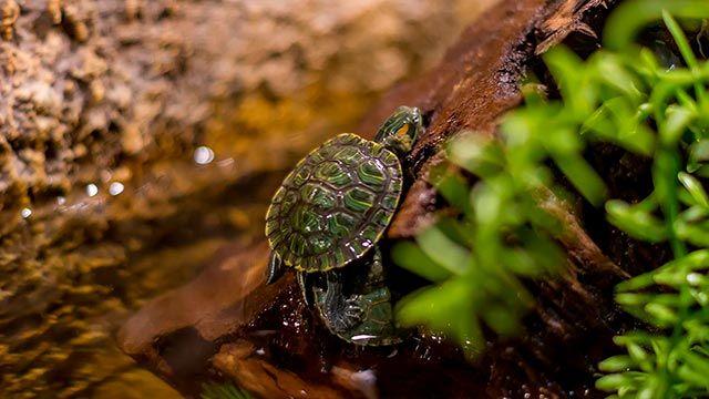 tortugas agua acuaterrario