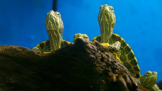 tortugas agua