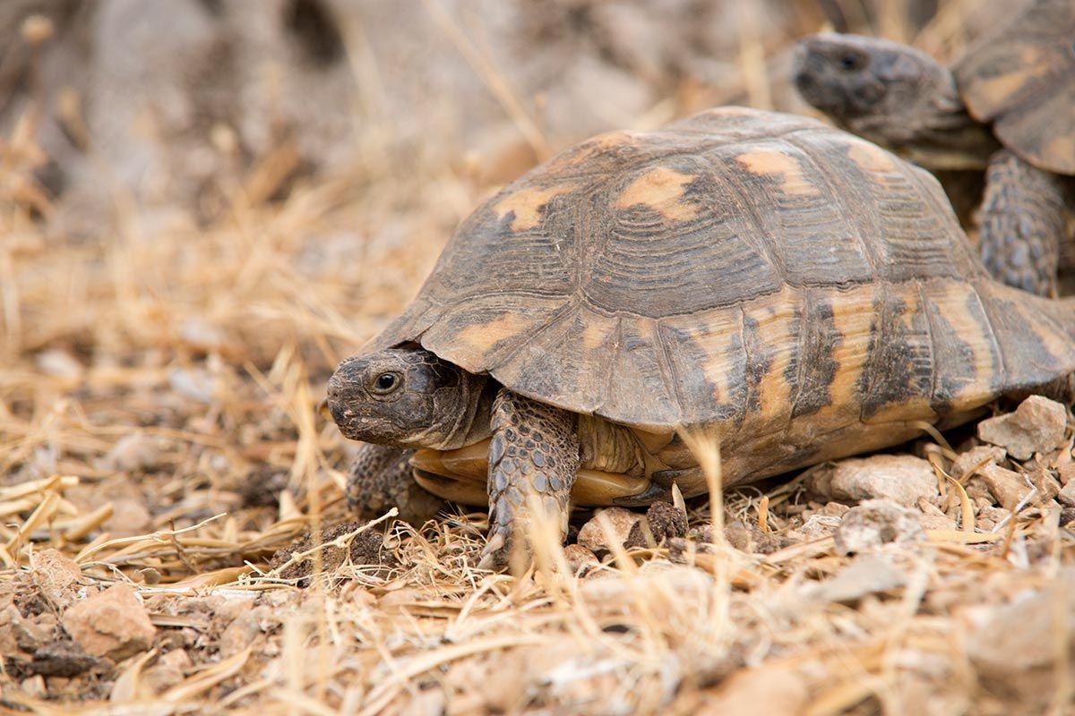 rasgos tortugas