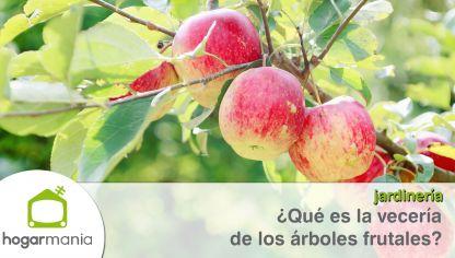 Qu rbol plantar para un jard n peque o hogarmania for Arboles que dan sombra para jardin