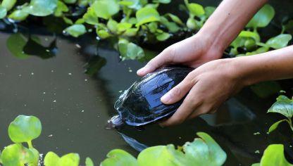 Tortugas terrestres hogarmania for Estanque de tortugas