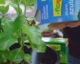 Cómo potenciar el color de las flores de las hortensias - Abono específico hortensias variedad azul