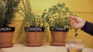 Personalizar maceta para plantas aromáticas