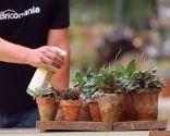 Abono foliar para peperomia