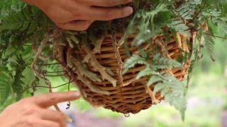 Plantación con helechos colgantes