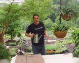 Plantación de helechos en cestos colgantes - Variedades