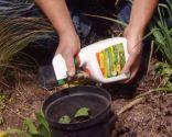 Herbicidas para el césped y el jardín - Herbicida correhuela