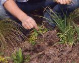 Herbicidas para el césped y el jardín - Correhuela