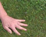 Herbicidas para el césped y el jardín - Trébol