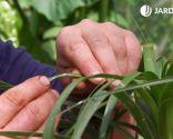 Cómo eliminar la plaga de cochinilla con productos biológicos - Manchas cochinilla