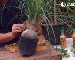 Cómo eliminar la plaga de cochinilla con productos biológicos - Eliminar hojas secas