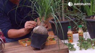 Cómo eliminar la plaga de la cochinilla con productos biológicos