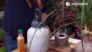 Eliminar la cochinilla algodonosa
