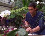 Cómo eliminar la plaga de cochinilla con productos biológicos - Pulverizar orquídeas