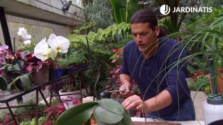 ¿Cómo se elimina la plaga de cochinillas en la orquídeas?