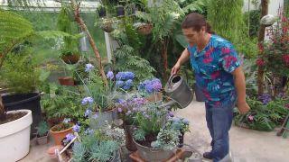 deco-660-jardineria-composicion-verano-tonos-azules-detalle