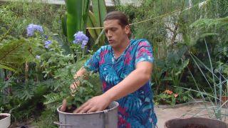 deco-660-jardineria-composicion-verano-tonos-azules-paso-2