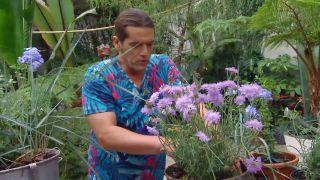 deco-660-jardineria-composicion-verano-tonos-azules-paso-3