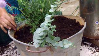deco-660-jardineria-composicion-verano-tonos-azules-paso-4