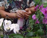 Cómo reproducir orquídeas a partir del tallo floral - Abono foliar