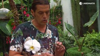 Cómo reproducir orquídeas a partir del tallo floral