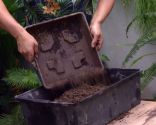 Cultivar nenúfares en contenedor - Paso 1