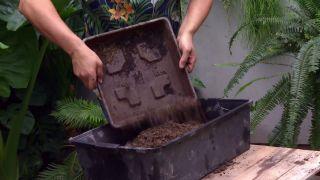 Cultivar nenúfares en contenedor