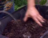 Cultivar nenúfares en contenedor - Paso 2