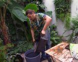 Cultivar nenúfares en contenedor - Paso 3
