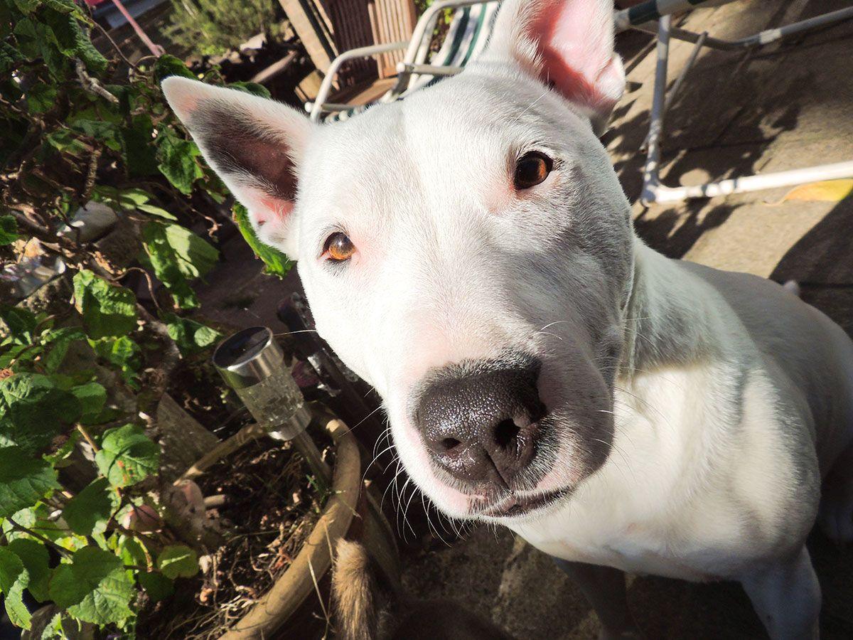 mascotas perros exposición sol