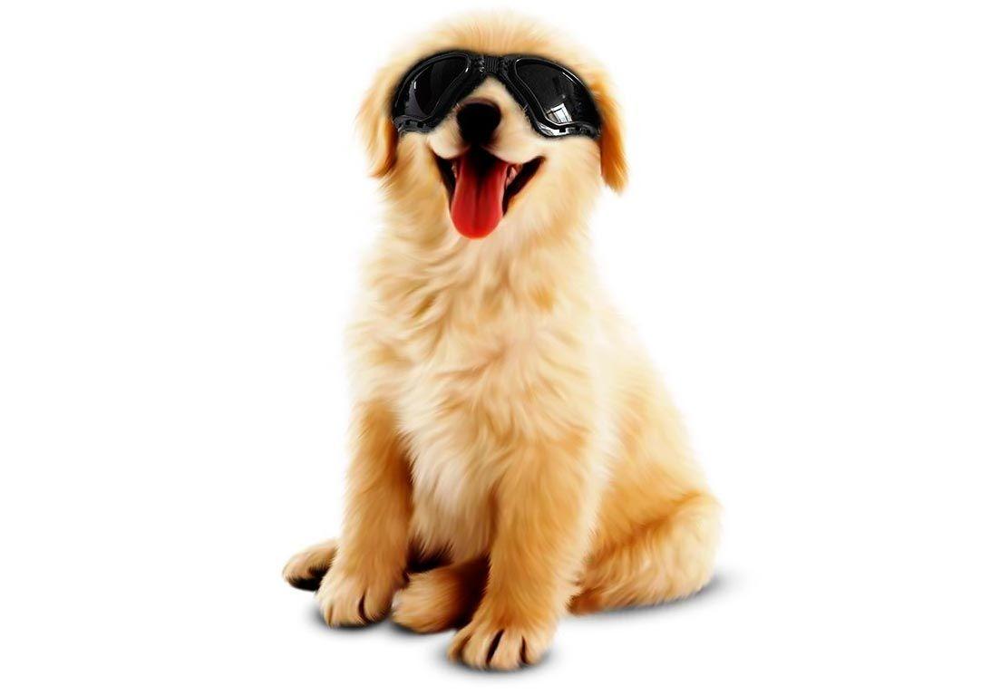 gafas sol perros