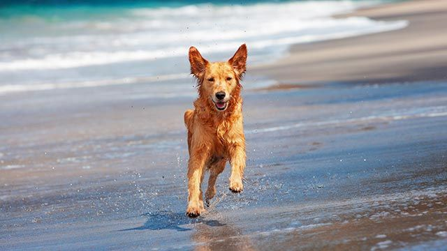 Perro corriendo por orilla del mar