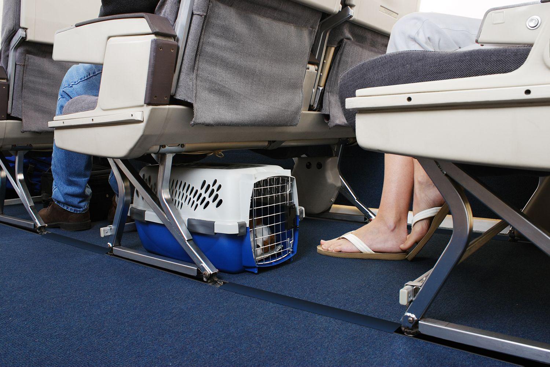 Viajar perro en avión