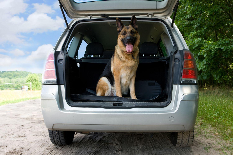 Viajar perro en coche