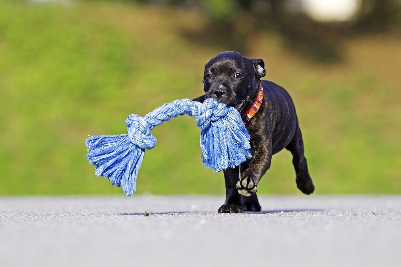 Equipaje de perro