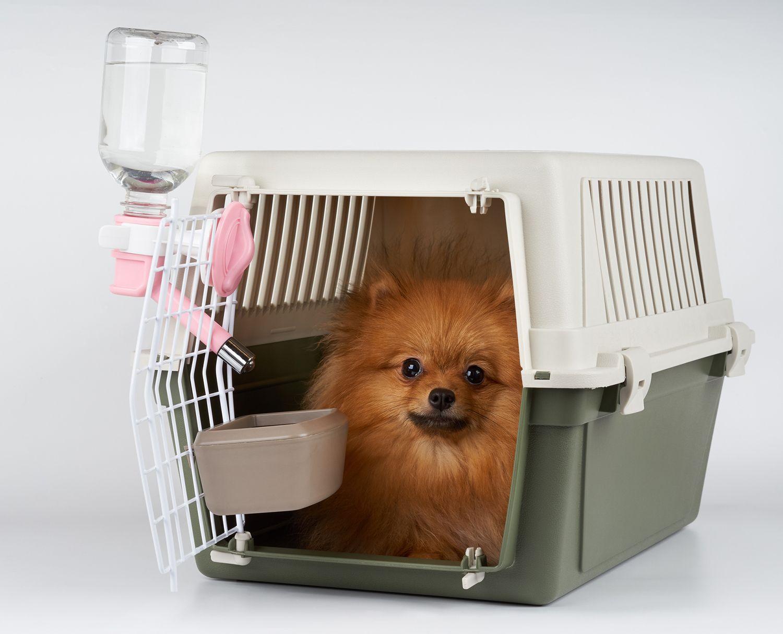 Transportín de perro