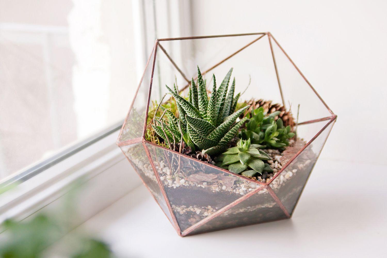 Plantas para decorar tu casa hogarmania - Decoracion plantas interior ...