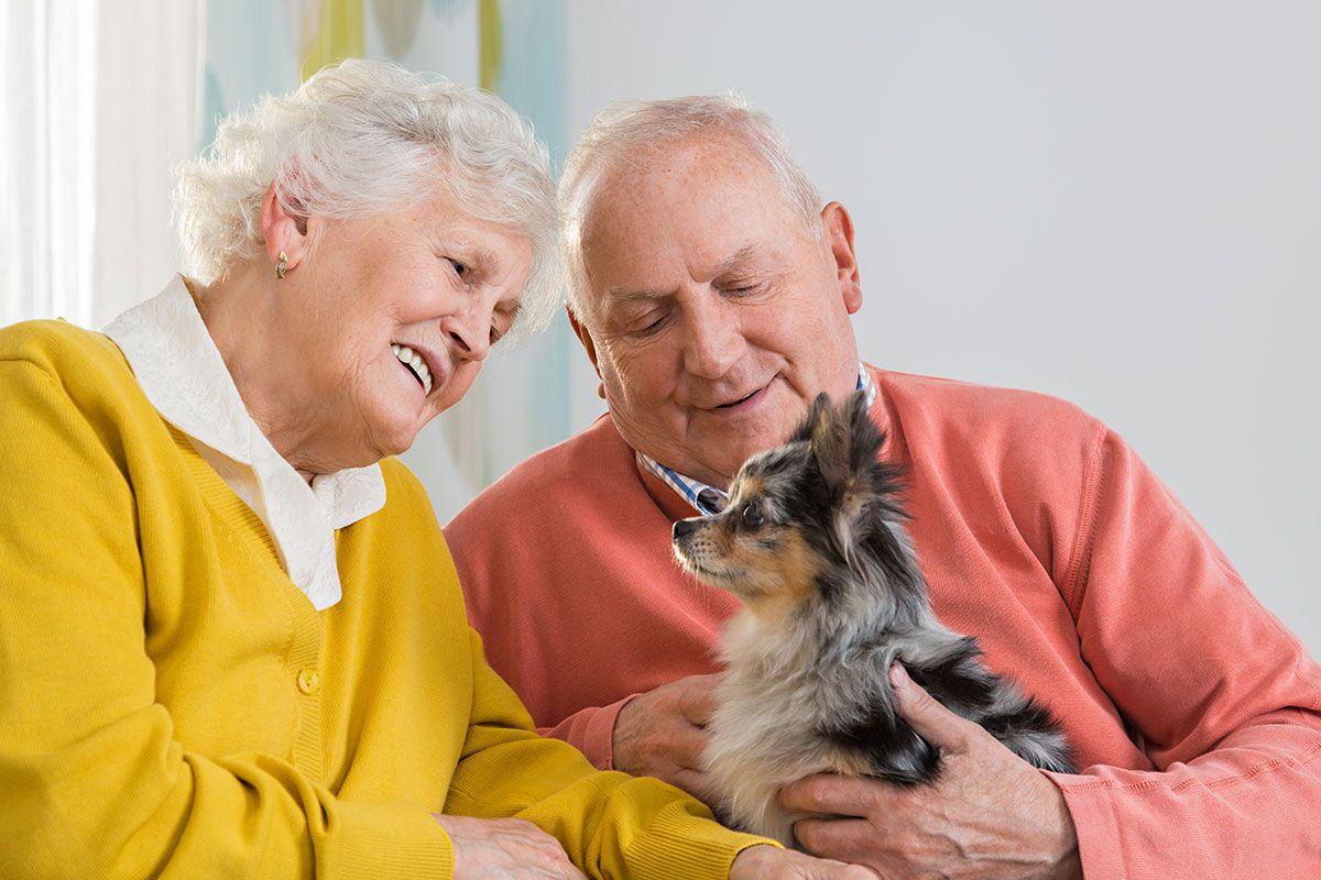 terapia animal ancianos