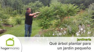 ¿Qué árbol plantar para un jardín pequeño?