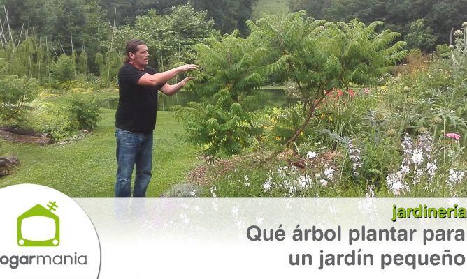 Qu rbol plantar para un jard n peque o hogarmania for Arboles para jardines pequenos