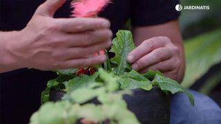 Por qué las hojas de las plantas de vuelven amarillas y cómo solucionarlo