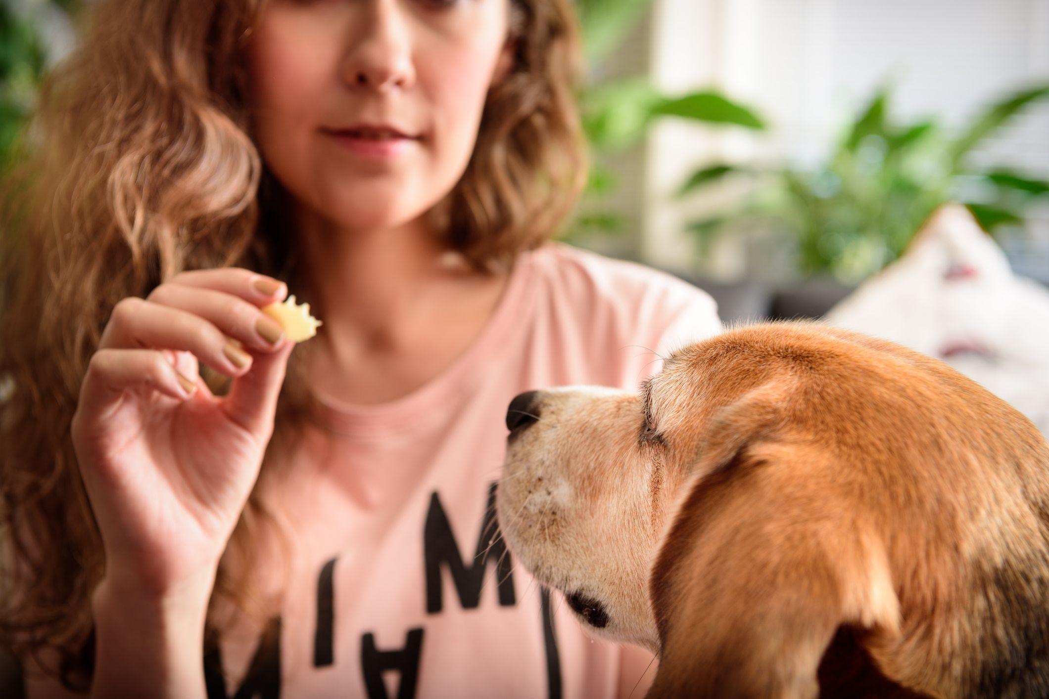Golosina para el perro