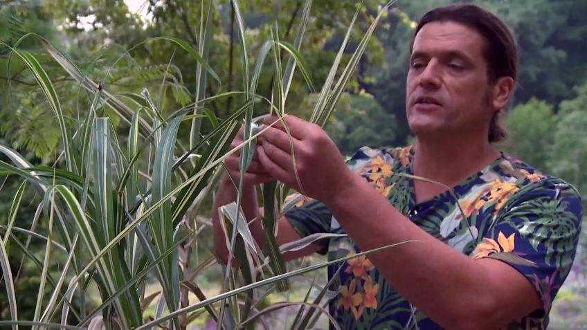 los consejos de jardinera del fin de semana 15 y 16 de julio de 2017 - Bricomania Jardineria