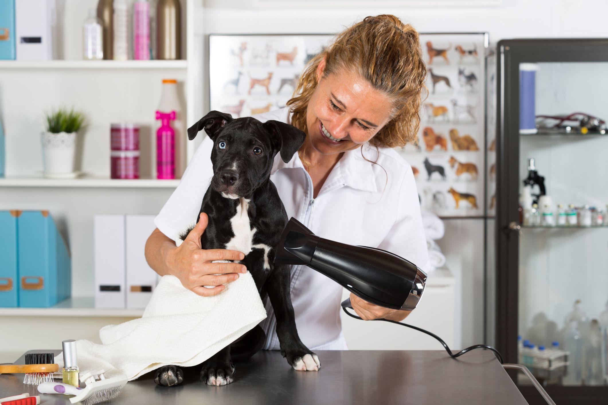 Secar al perro