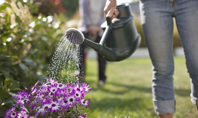 Resultado de imagen para regar las plantas